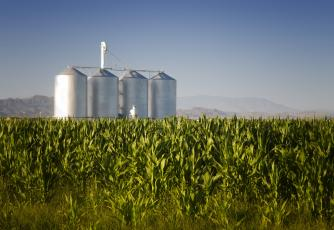 Corn crop with farm silos
